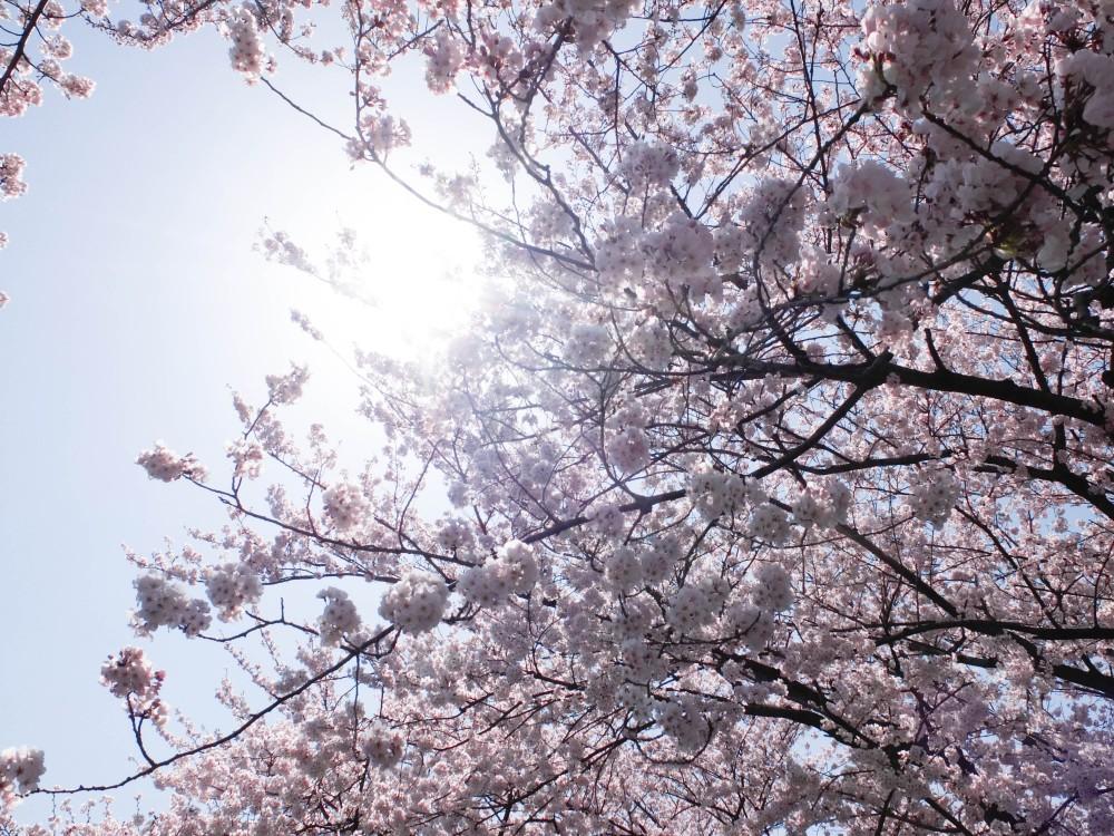 【初めての方へ】春は出会いと別れの季節ですね