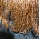色落ちしたヘアカラーを奇麗に見せる1つの方法